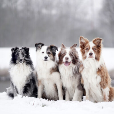 Vier süße Fellnasen im Schnee
